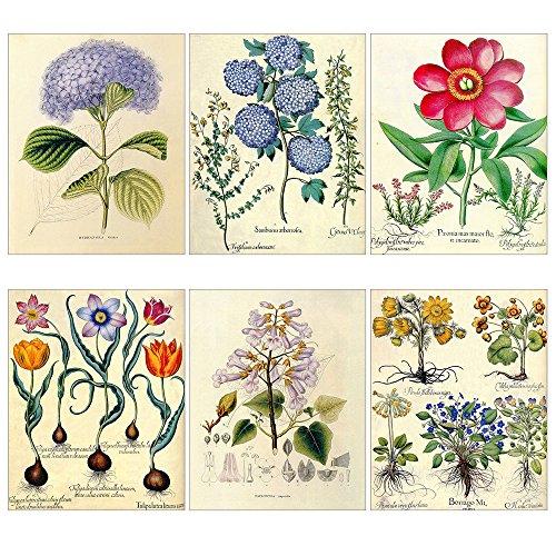 Vintage Posters Prints Flowers Floral Wall Art Decor Botanical Pop Old Fashioned Illustration 6Pcs