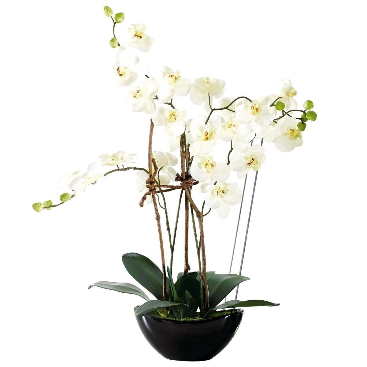 Pureday Pianta artificiale Orchidea Con Vaso in Ceramica Nero