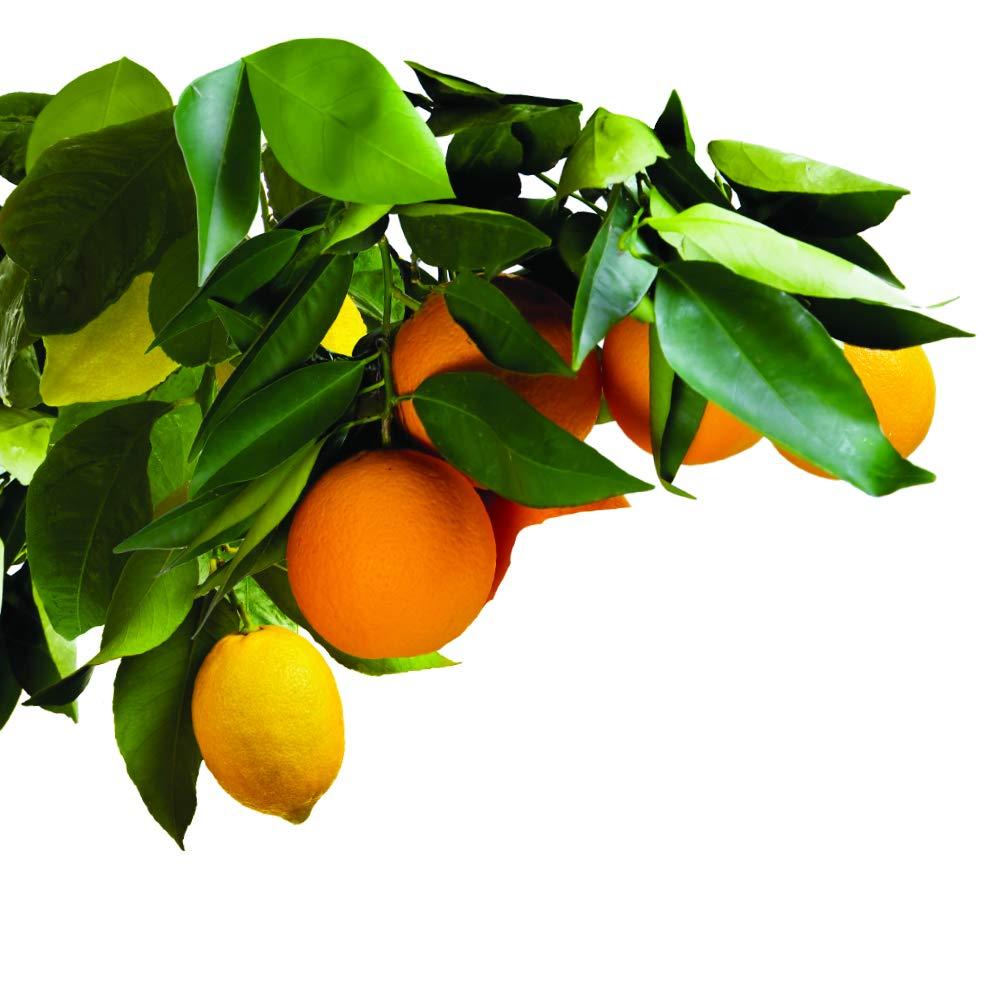 Jobes frutas picos de árbol 8 - 11 - 11 - Pack de 5: Amazon.es: Jardín