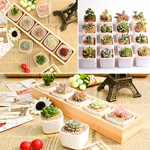 Chajb Succulent Plant Fleshy Flower Pot Square Box Decorative Container Garden Planter by Chajb (Image #3)