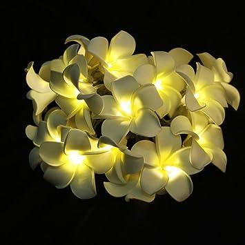 Ledmomo Chaude Frangipanier Décorationlumière Lumineuse Fleur Led À Plumeria Piles Guirlande Blanche 20 TJlcuFK135