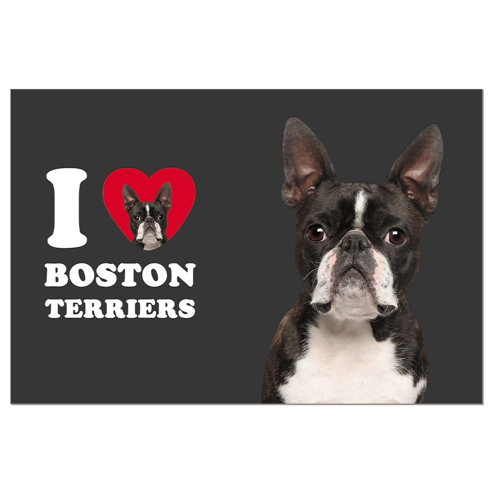Tree-Free Greetings ECOnotes Blank Note Cards, Matching Envelopes, Blank Stationary Card Set, 4'' x 6'', Boston Terrier, Pack of 12 (FS66016)