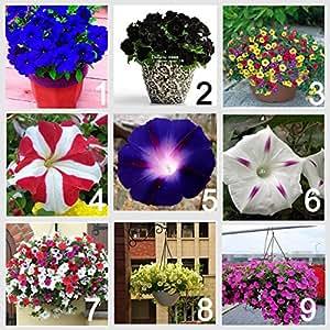 9 colors 450 Petunia seeds (50 seeds each color), Mix Garden Petunia Shuttlecock Flower Horn Bonsai Flower Seed- 450 seeds/bag