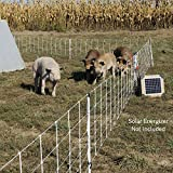 Premier Pig QuikFence Electric Netting, White, 6/30/12 (30''H x 100'L)