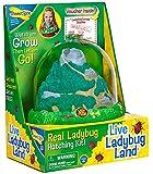 Original Ladybug Land with Voucher
