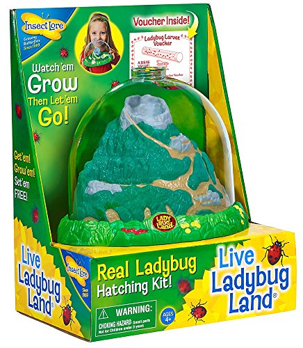 Insect Lore Original Ladybug Land with Voucher by Insect Lore