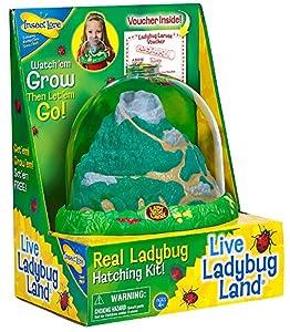 Amazon.com: Insect Lore Ladybug Growing Kit Toy - Includes ...