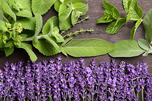 LAVENDER SAGE TYPE FRAGRANCE OIL - 8 OZ - FOR CANDLE & SOAP MAKING BY FRAGRANCEBUDDY - FREE S&H IN USA ()