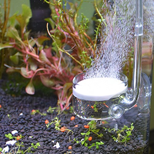 Yagote CO2 Diffuser Glass Reactor with U Shape Connecting Tube for Pollen Aquarium Plants Tank(CO2 Diffuser-Small Flat-Bottomed)