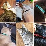 Personalized Nylon Cat Collar Break Away with