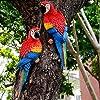Cuasting-Resin-Parrot-Statue-Wall-Mounted-DIY-Garden-Tree-Decoration-Animal-Sculpture-Ornament-Left