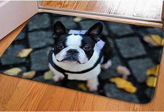 Recoger belleza Bulldog Francés impresión interior Welcome Felpudo para porche balcón puerta corredera agua – Felpudo antisuciedad alfombrilla de puerta de entrada alfombra de dormitorio dormitorio baño invierno suave cocina pequeña alfombra: