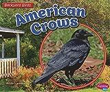 American Crows (Backyard Birds)