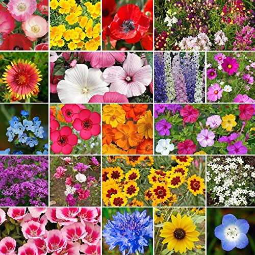 All Annual Wildflower Seed Mix- 5 Pounds, Bulk, Mixed