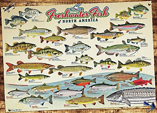 1000 piece fish puzzles - 3