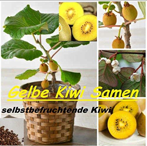 25x Gelbe Kiwi Selbst-befruchtend Samen Hingucker Pflanze Rarität #108