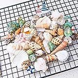 "teeny tiny tank - HAYATA Home Polished Sea Shells & Nautical Decorations– Sizes 0.5"" to 2.0"" - Approx. 45 Beach Shells & Nautical Decorations in Mixed Colors Good For Aquarium kit Fish tank Bubbler"