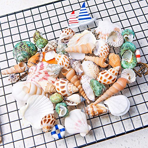 "HAYATA Home Polished Sea Shells & Nautical Decorations– Sizes 0.5"" to 2.0"" - Approx. 45 Beach Shells & Nautical Decorations in Mixed Colors Good For Aquarium kit Fish tank Bubbler (Mini Beach Natural Shells)"