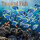 Tropical Fish 2018 12 x 12 Inch Monthly Square Wall Calendar with Foil Stamped Cover, Animals Marine Wildlife Fish
