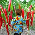 10Pcs Home Garden Rare Giant Spices Red Spicy Chili Pepper Seeds Vegetable Plant