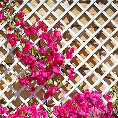 Celosia Pvc 48 Mm Panel Para Valla Jardin en varios colores: Amazon.es: Jardín