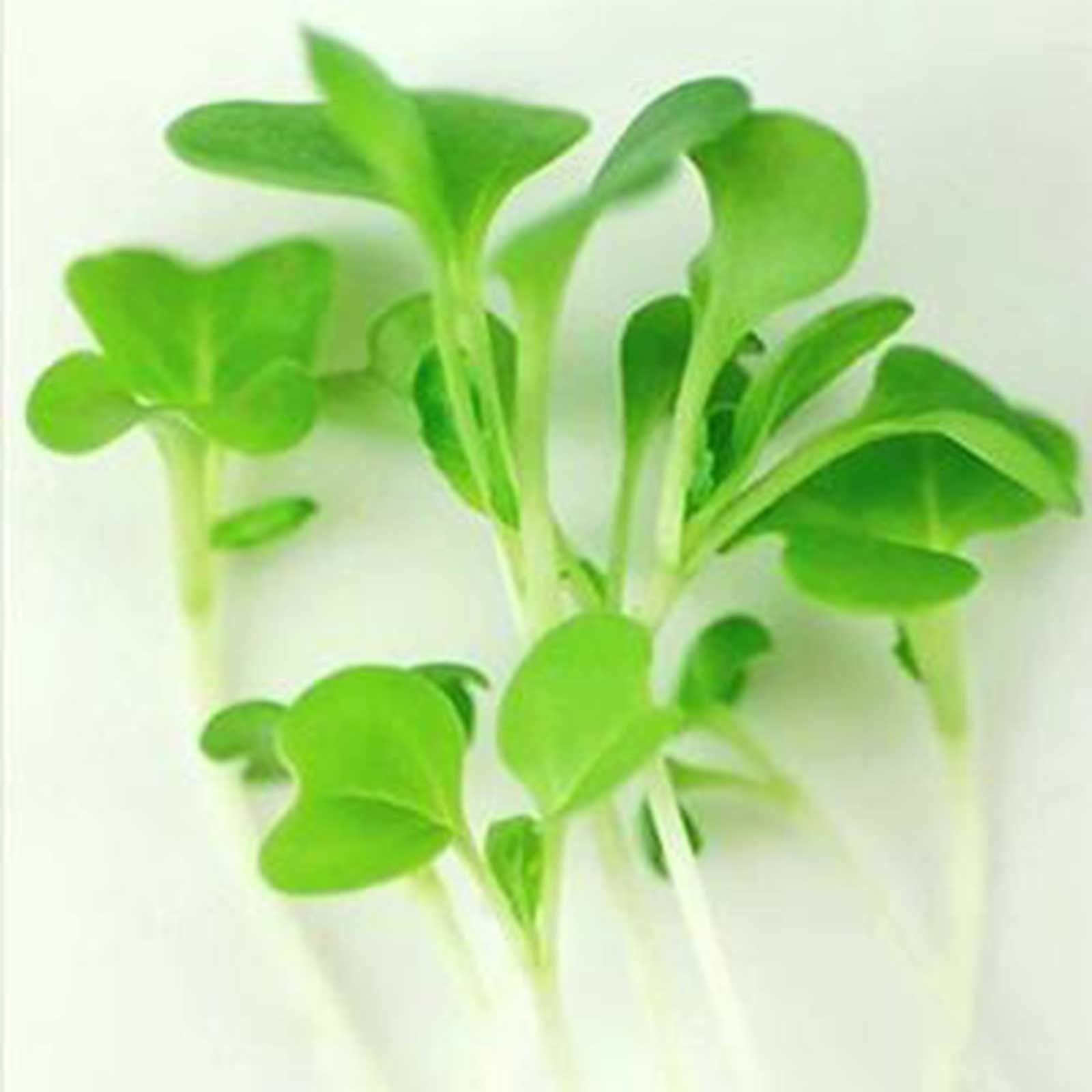 Deluxe Exotic Microgreens Seed Assortment | 12 Non GMO Varieties Including Chia Tatsoi, Pak Choi, Cress And More | Add Some Exotic Highlights To Your Cooking by Handy Pantry (Image #5)