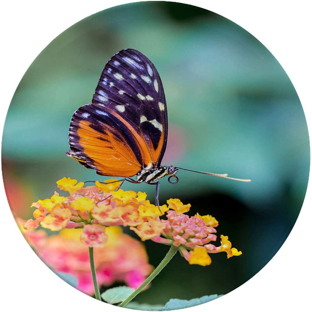 Porcelain Dinner Plates,Golden Helicon Butterfly Feeding On Wild Flowers,dinner Plates For Indoor And Outdoor Use,break-resistant,6 Inch 6 Piece Set