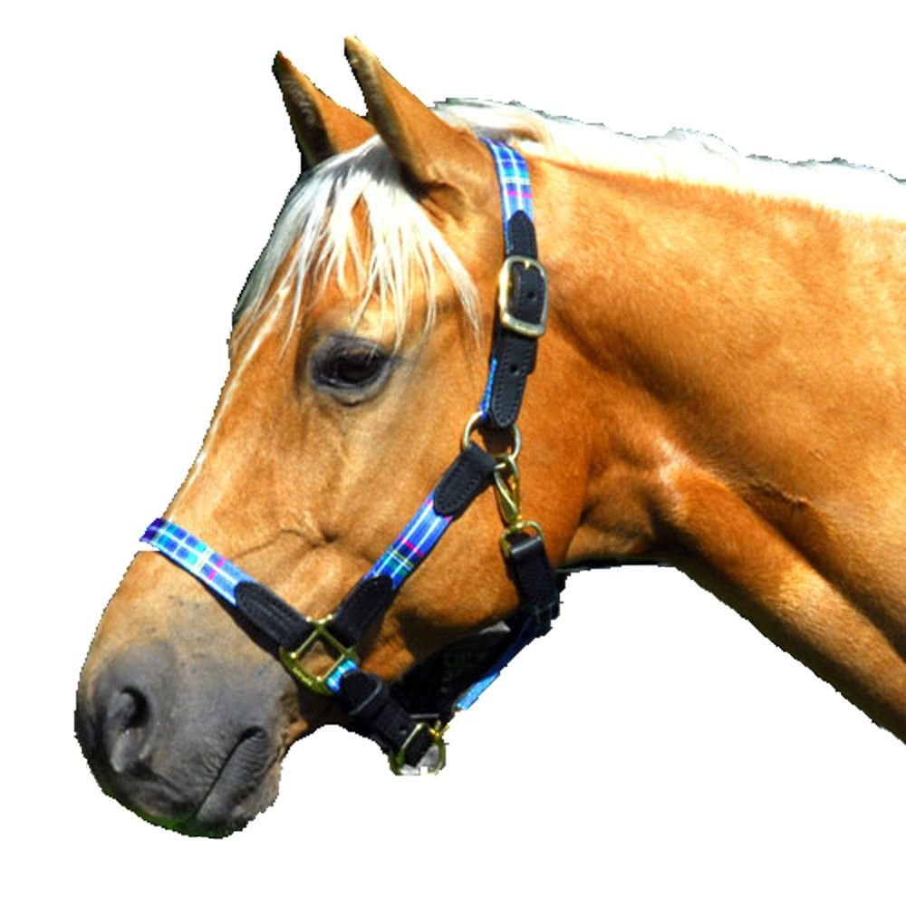 Intrepid International Highland Halter with Leather Accents, Warmblood bluee