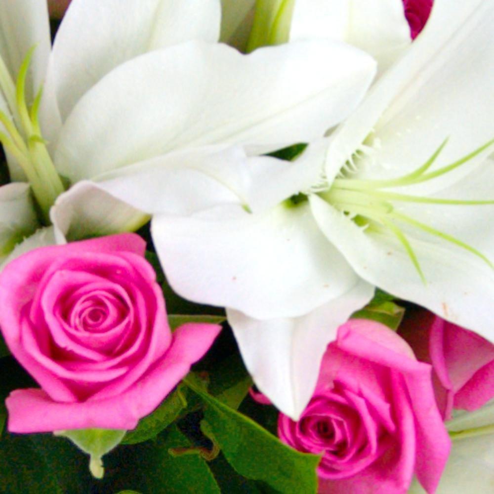 Clare florist rose and lily fresh flower bouquet splendid white clare florist rose and lily fresh flower bouquet splendid white lilies and gorgeous pink roses amazon garden outdoors izmirmasajfo