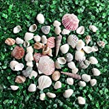 LoveInUSA Sea Shells with Jar Mixed Natural Beach Decorative Seashells for DIY Home Gifts Events Crafting Various Sizes 50~70 PCS