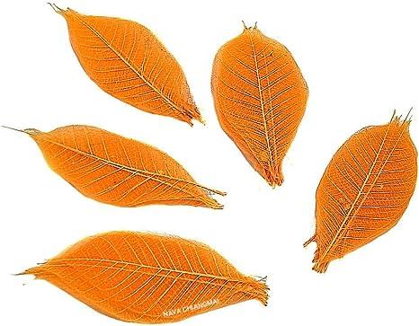 Pack of 100 Skeleton Leaves Decorative DIY Craft Artificial Leaves Craft Card Scrapbook DIY Handmade Embellishment Decoration Art Yellowish Green NAVA CHIANGMAI Rubber Tree Leaves