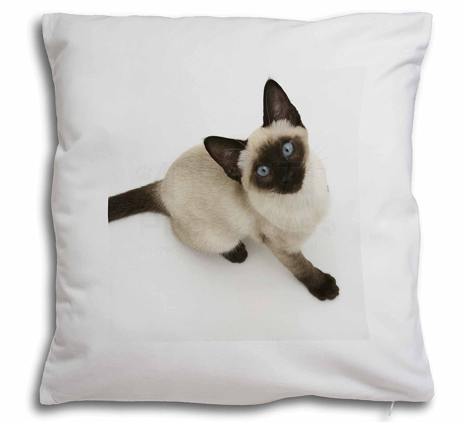 Two Devon Rex Cats Soft Velvet Feel Cushion Cover With Inner Pillow AC-20-CPW