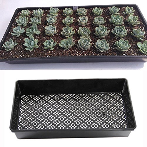 Bazaar 54cm Rectangle Bean Sprout Growing Tray PP Plastic...