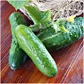 Package of 90 Seeds, Boston Pickling Cucumber (Cucumis sativus) Non-GMO Seeds By Seed Needs