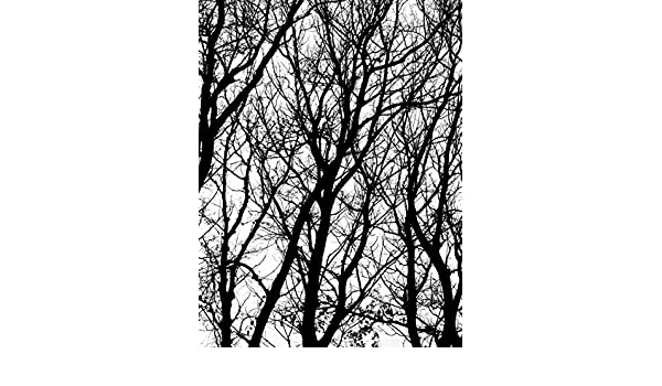 3 x 4 JP London Heavyweight Non Woven Art Prepasted Removable Wall Mural Poe Forest Silhouette Trees at 3 Wide by 4 feet high PMURLT2231