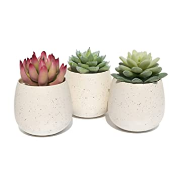 Succulent Planter Pot   Set Of 3   Ceramic Decorative Small Flower Plant  Pot With Drainage
