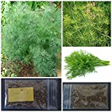Greek Dill Seeds ~150+ Top Quality Seeds - Amazing Flavor!
