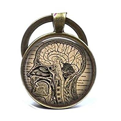 Llavero con diseño de anatomía de cerebro humano, ideal para ...
