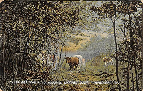 What are the Wild Woods Saying Lake Huntington, New York, Postcard ()