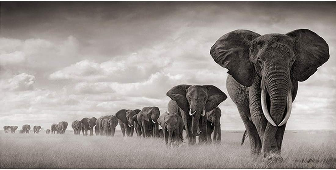 VIIRY Elephant Canvas Prints Wall Art Abstract Poster Black and White Modern Art Decor Painting for Living Room Bedroom Home Decorations(Unframed,16x32inches)