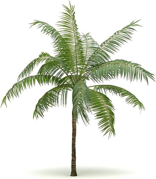 FOT-64759134-36 36 in H x 36 in W Wallmonkeys Single Palm Tree Wall Decal Peel and Stick Graphic WM105806
