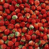 (訳あり) 良食味の新しい夏イチゴ(秋田県産なつあかり)1kg(市販4pc分) 無選別品詰め合わせ