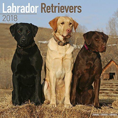 Labrador Retriever Calendar 2018, Mixed - Dog Breed Calendar - Premium Wall Calendar 2017-2018