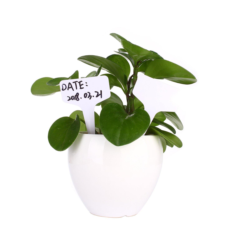 Wei/ß 100 St/ücke T-Form PVC Pflanzenetiketten Pflanzen Etiketten Pflanzschilder Pflanzenstecker Stecketiketten Beschriften Schilder