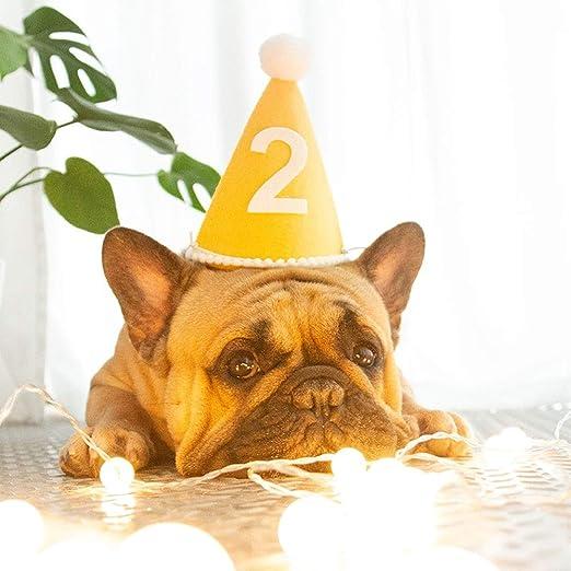 Fighrh Fiesta de cumpleaños para mascotas Sombrero Perro ...