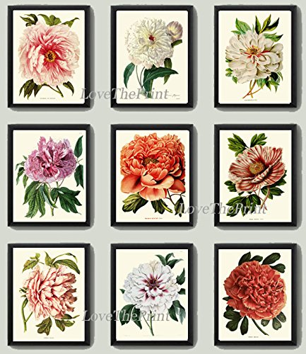 Botanical Set of 9 Prints Antique Beautiful Large White Pink Coral Cream Peony Plants Flowers