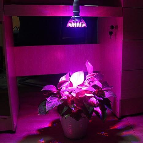 Bombilla LED crecen ledmomo, E25 12 W Nueva luz Planta cebollas Plantas Diseño Cebolla Para