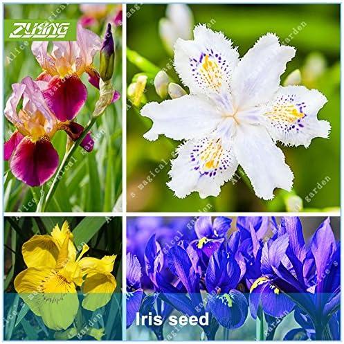 ZLKING 100pcs semillas de flor del iris de Semillas Bonsai Plantas para jardín Hermosa flores naturales Flores del jardín semillas de Rose: Amazon.es: Jardín