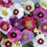 50 Mixed Hollyhock Seeds