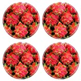 Liili Round Coasters IMAGE ID 10978387 Dragon fruit